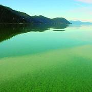 Das Cyanobakterium Aphanizomenon Flos Aquae (AFA / ABV), das im Klamath-See wächst, ist ein Naturschatz, den man nicht ausnutzen sollte.  Der AlphaOne von Jacques Pruniers SynerJ-Health-Gruppe ist dann Ihr bestes Gesundheitsgut.