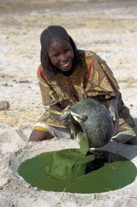 Spirulina wird seit Anbeginn der Zeit im Tschad künstlich auf Gülle angebaut. AFA (AlphaOne SynerJ-Health) wird in wildem und natürlichem Zustand geerntet.